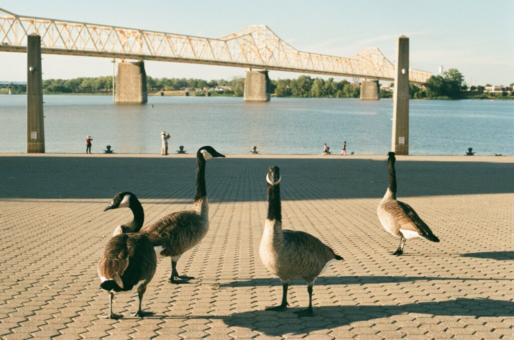 Waterfront Park in Louisville