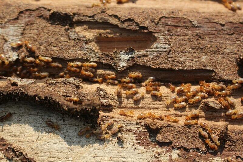 Getting a Termite Damage