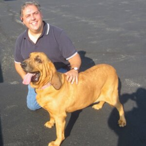 Black and Tan American Coonhound... that I transported from Foster to Forever Family.