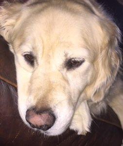 Sam the homebuying dog