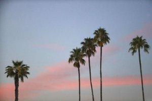 Sol-Mar-REI-California-Palms