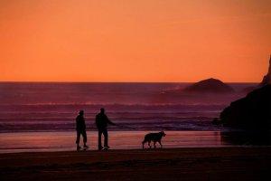 retirement-beach-walk-with-dog
