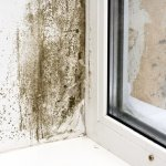 selling a home with mold